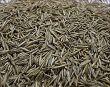 semena ovsyanicy krasnoy foto enl